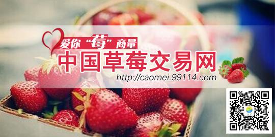 中国草莓交易网