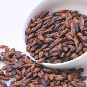 营养保健新品种-紫麦1号黑小麦种子 产量高 营养好 (小麦种子)