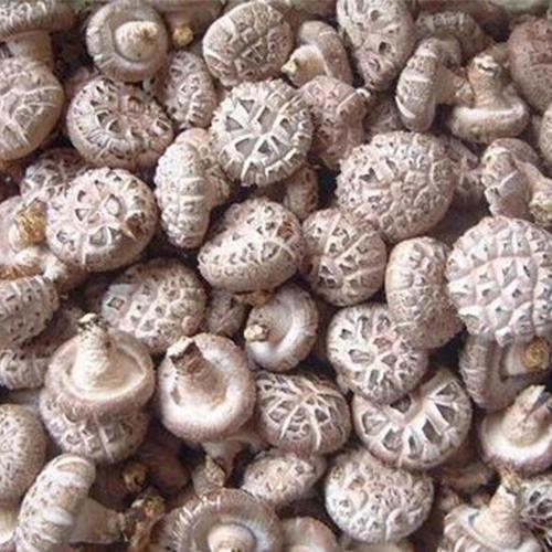香菇原产地大量出售鲜香菇干香菇湿香菇价格便宜品相优质食用菌香菇干货批发 鲜货打冷农家袋料香菇