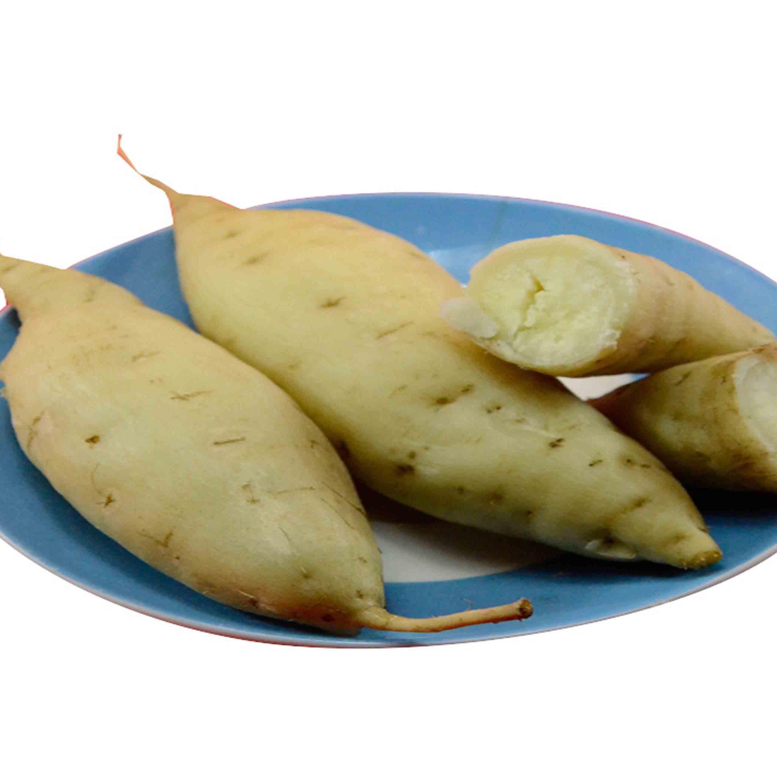 人参薯-人参与红薯培育的新品种
