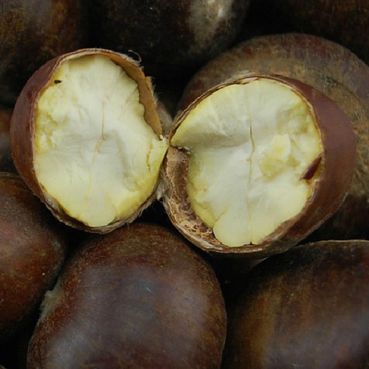 供应  广西特产农家自种有机新鲜生板栗优质生栗子毛栗香甜软糯大量批发