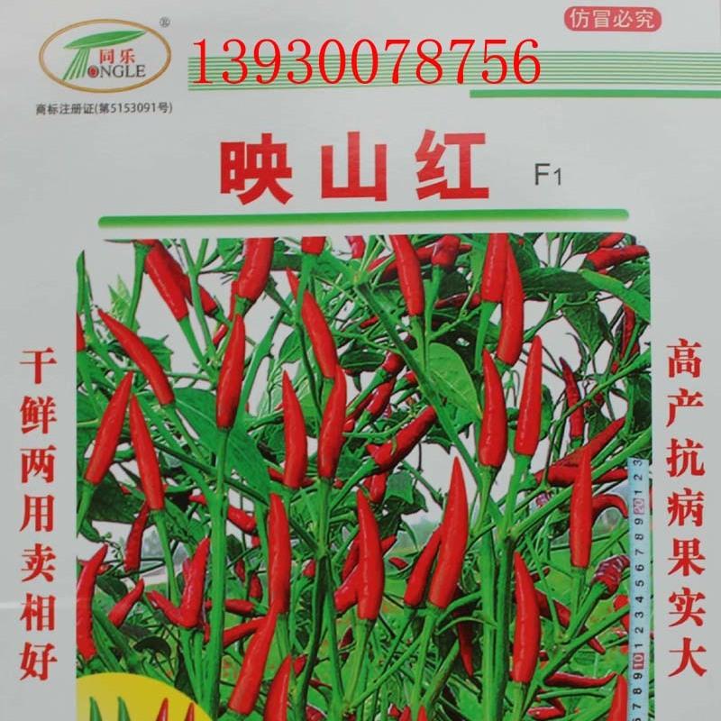 超高产单生朝天椒——映山红