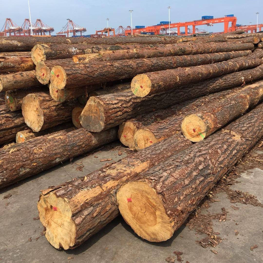供应进口欧洲赤松原木(PINUS SYLVESTRIS)